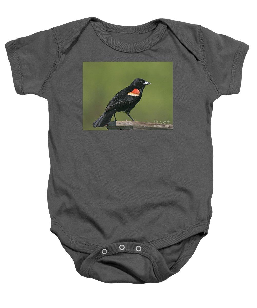 Bird Baby Onesie featuring the photograph Mr Blck Bird by Robert Pearson