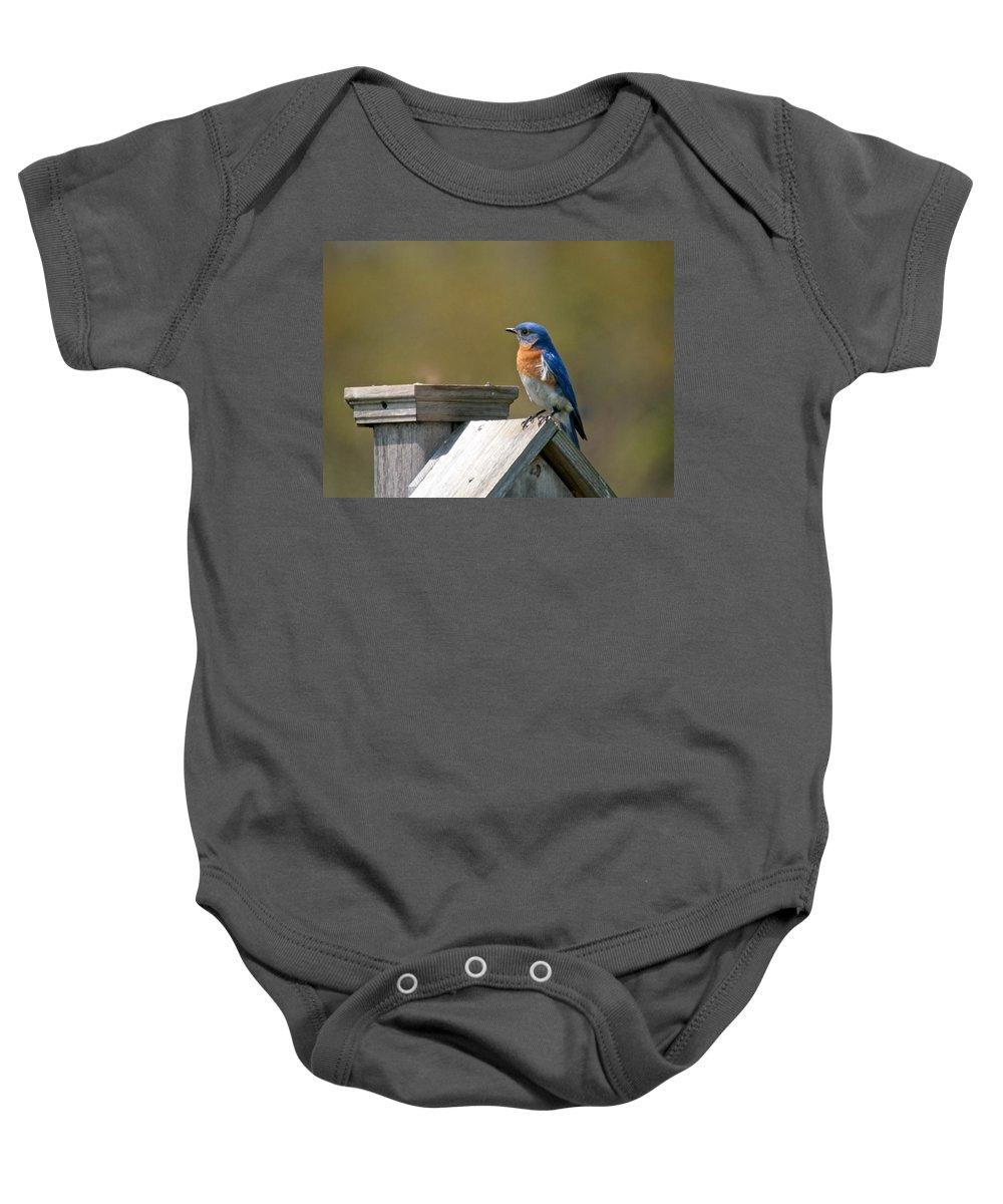 Blue Bird Baby Onesie featuring the photograph Mr Blue Bird by Robert Pearson