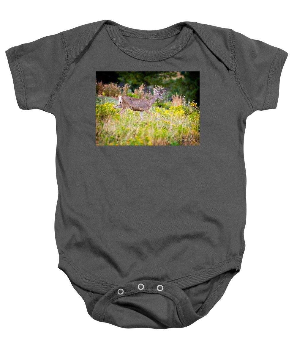 Mule Deer Baby Onesie featuring the photograph Mule Deer by Matt Suess