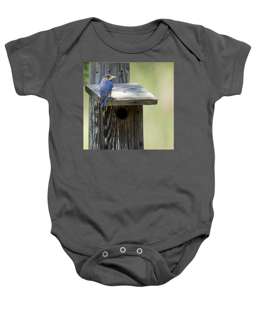 Smithville Baby Onesie featuring the photograph My First Bluebird by JG Thompson