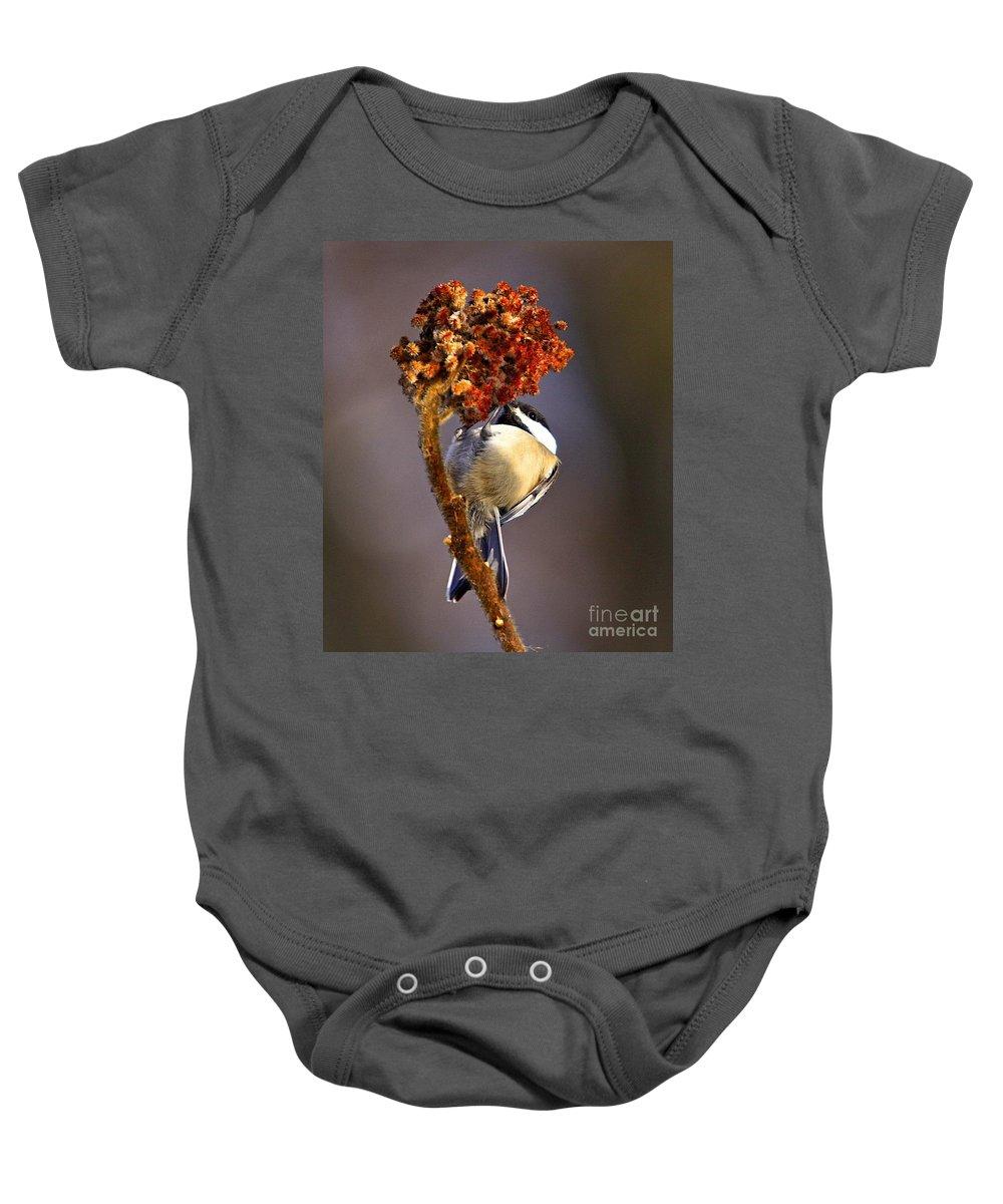 Bird Baby Onesie featuring the photograph My little chickadee by Robert Pearson
