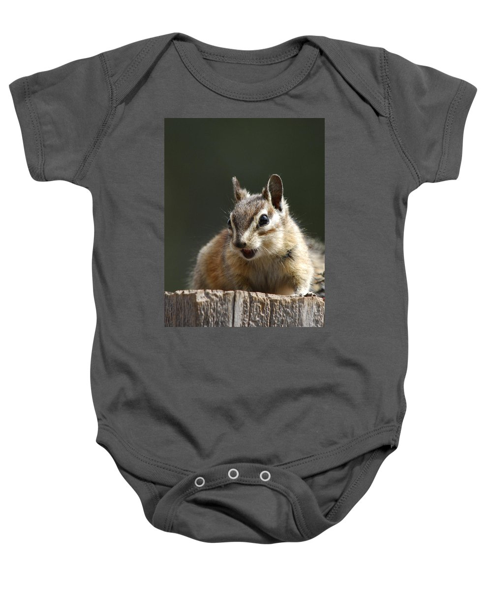 Squirrel Baby Onesie featuring the photograph My Name Is Alvin by Donna Blackhall
