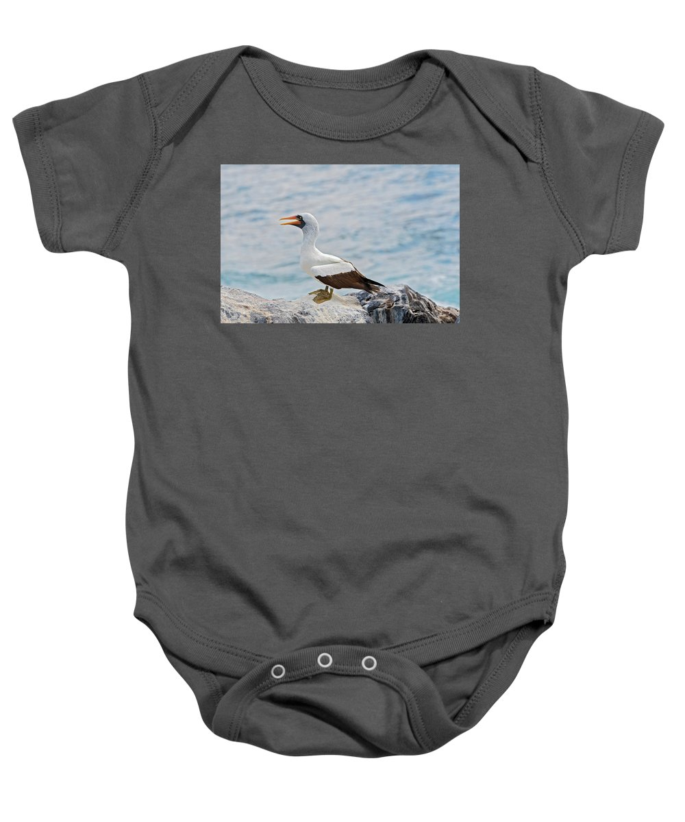 Galapagos Baby Onesie featuring the photograph Nazca Booby In Galapagos by Marek Poplawski