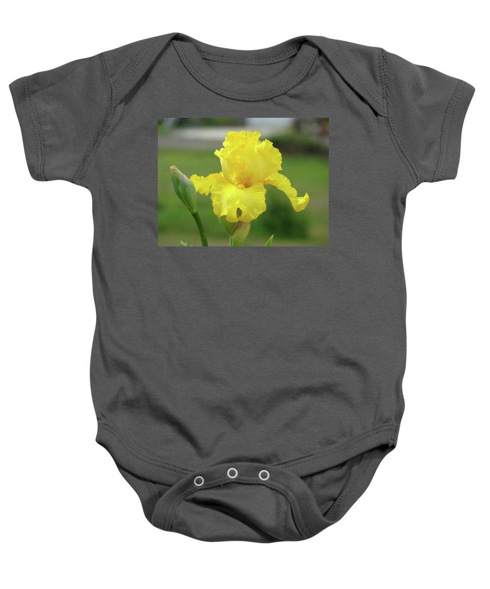 Iris Baby Onesie featuring the photograph Office Art Irises Yellow Iris Flower Giclee Prints Baslee Troutman by Baslee Troutman