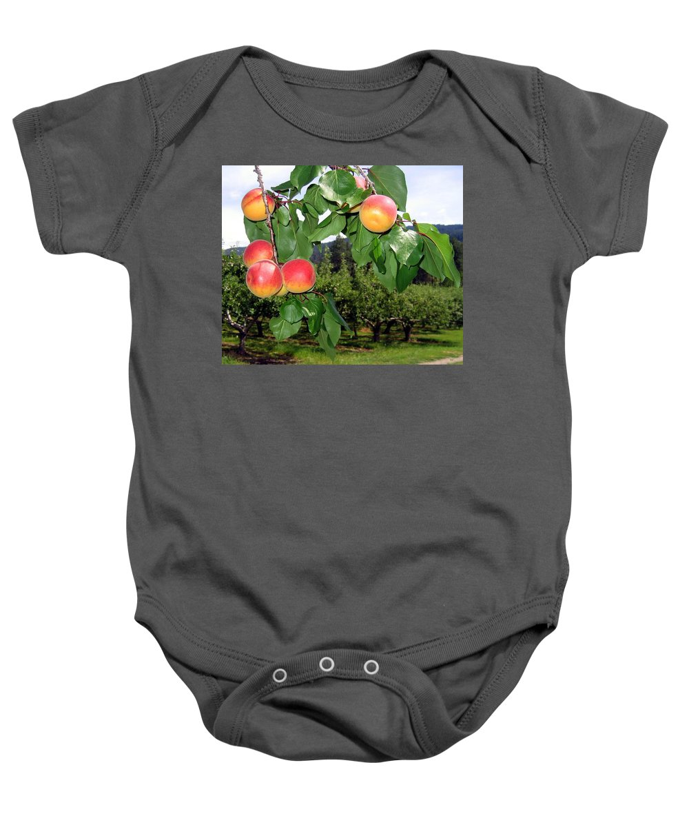 Apricots Baby Onesie featuring the digital art Okanagan Apricots by Will Borden