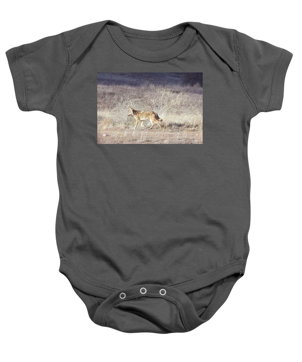 Coyote Baby Onesie featuring the photograph On The Prowl by Sandra O'Toole