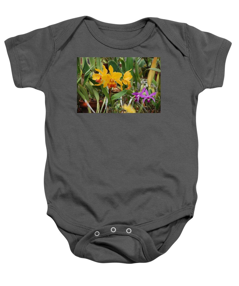 Orange Baby Onesie featuring the photograph Orangepurple Orchids by Rob Hans
