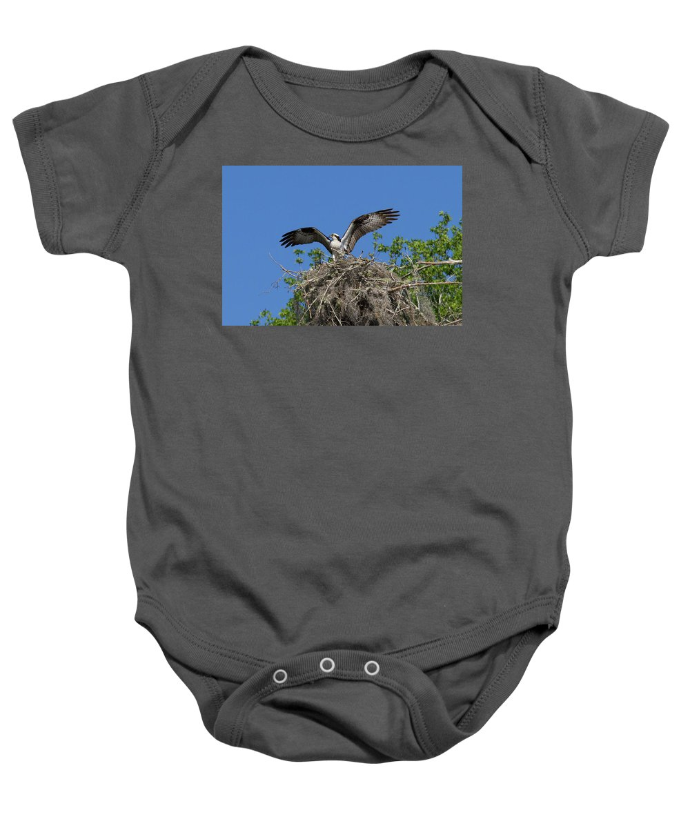 Osprey Baby Onesie featuring the photograph Osprey On Nest Wings Held High by Paul Rebmann