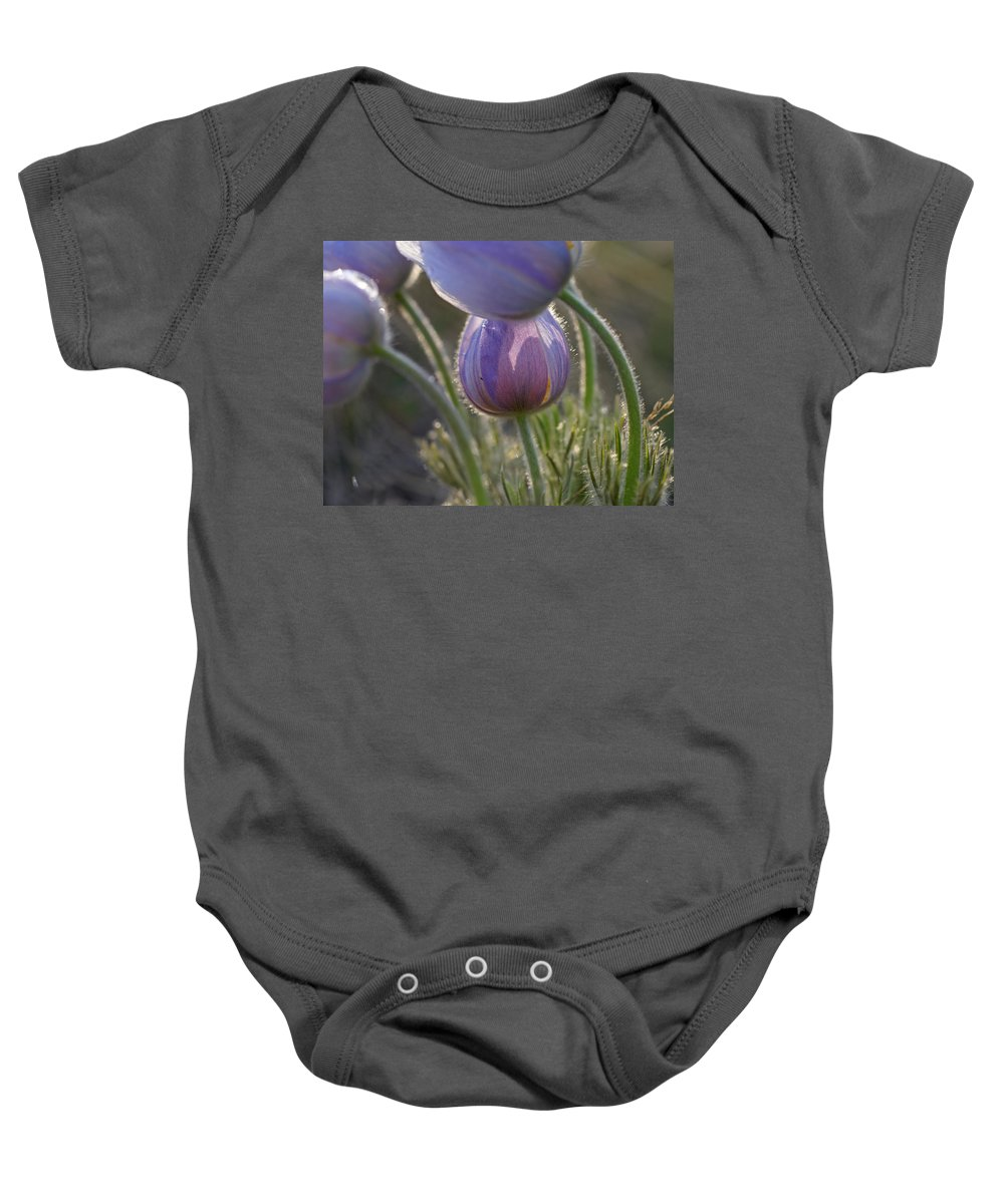 Pasque Baby Onesie featuring the photograph Pasque Shadows by Heather Coen