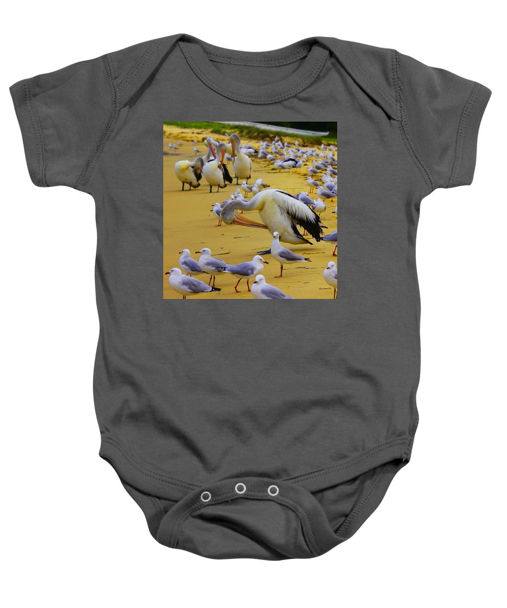 Australia Baby Onesie featuring the photograph Pelicans At Pearl Beach 3.1 by Giro Tavitian