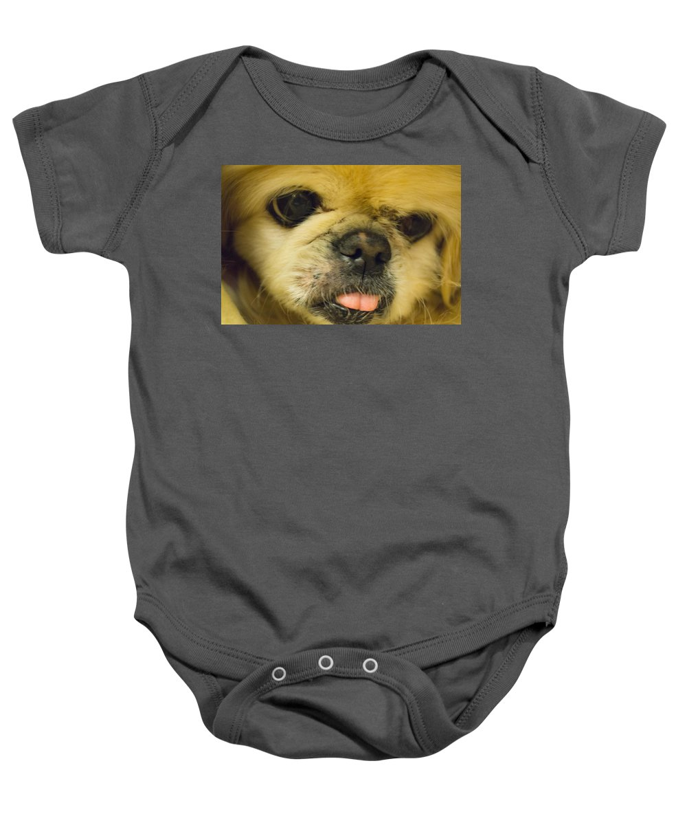Dog Baby Onesie featuring the photograph Pensive Pup by Craig David Morrison