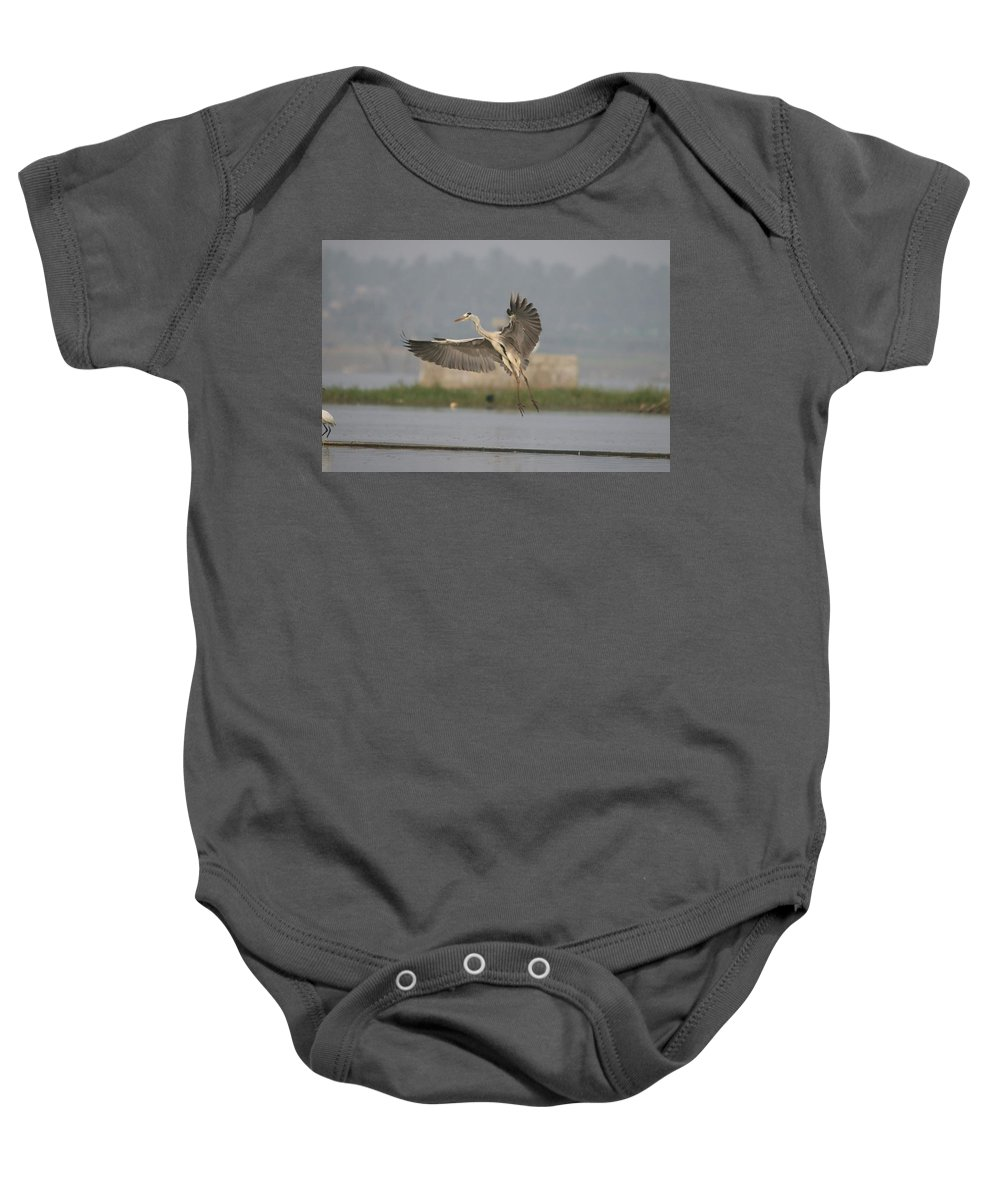 Flying Bird Baby Onesie featuring the photograph Photography by Madhushree Somanna
