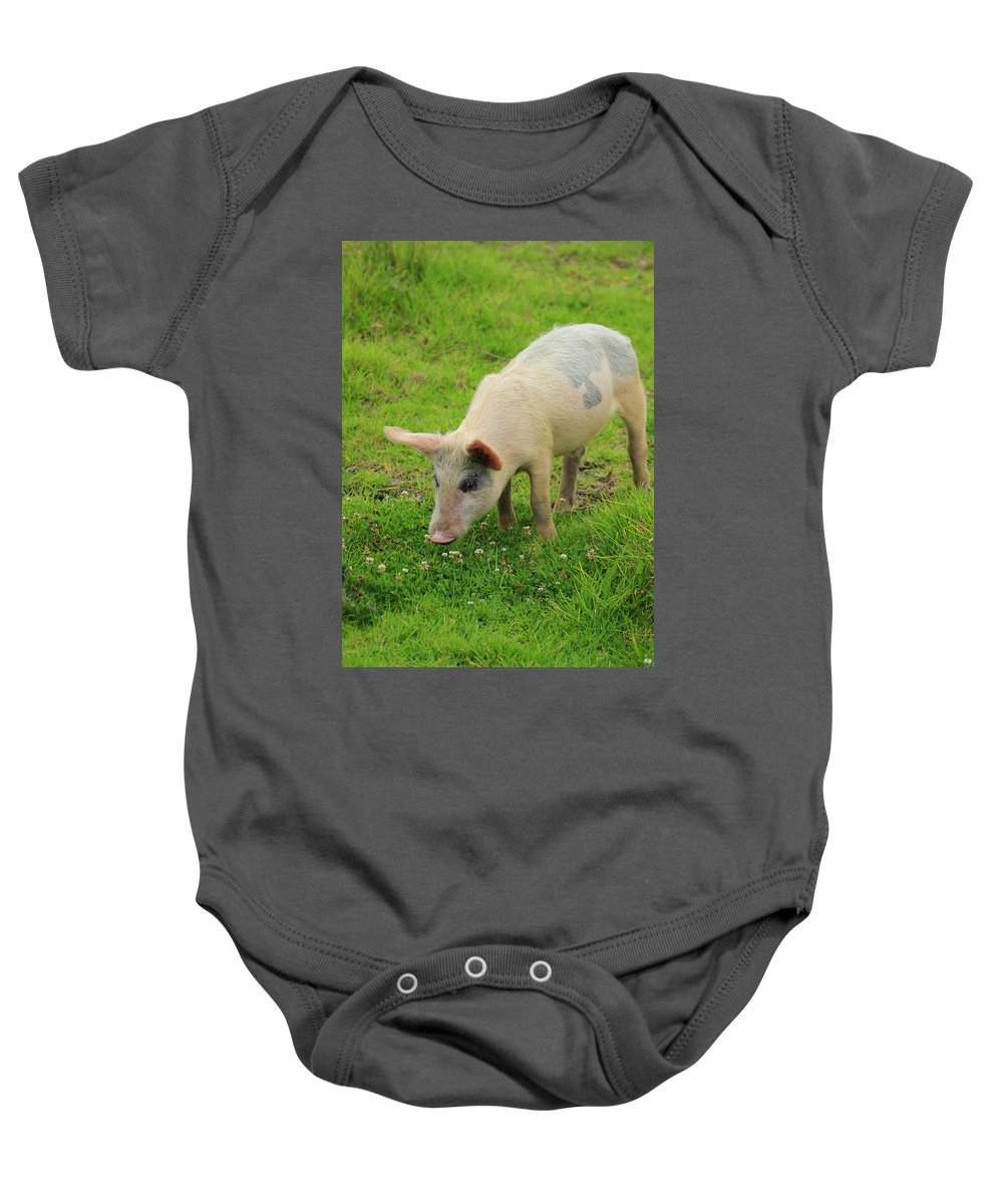 Pig Baby Onesie featuring the photograph Pig In Wildflowers by Robert Hamm