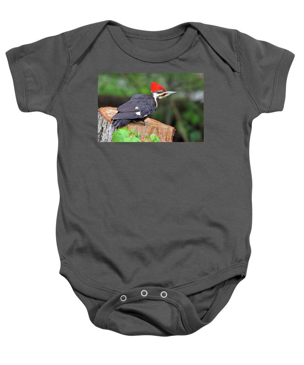 Bird Baby Onesie featuring the photograph Pileated Woodpecker by Allan Carrano