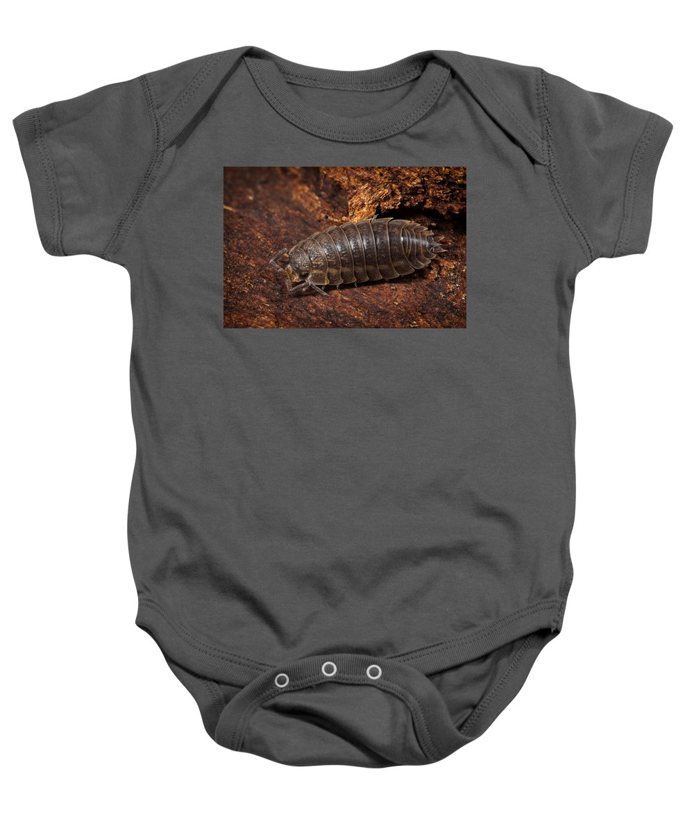 Pill Bug Baby Onesie featuring the photograph Pill Bug by Terry Leasa