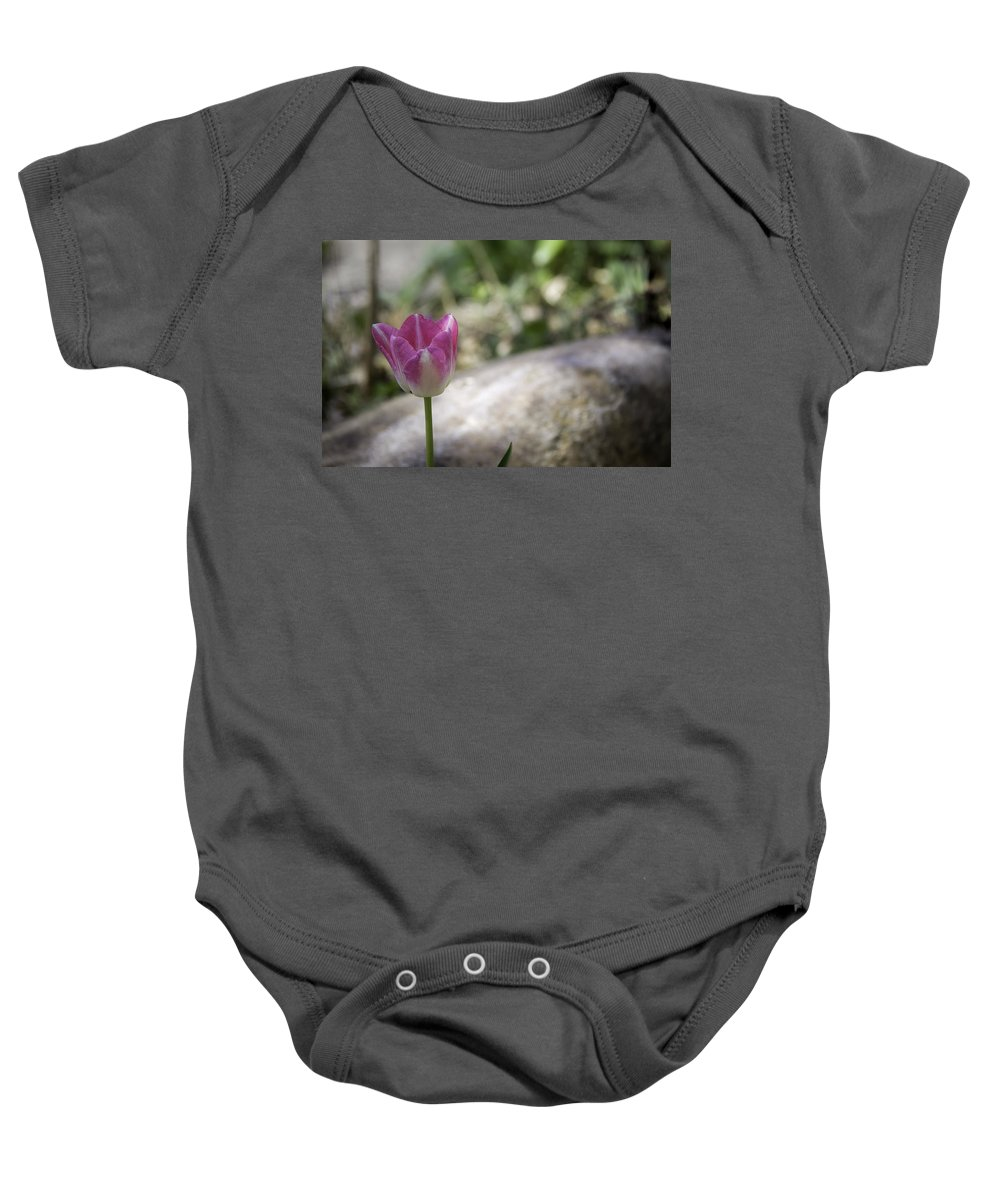 Flowers Baby Onesie featuring the photograph Pink And White Tulip 02 by Teresa Mucha