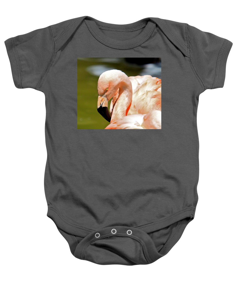 Tags: Baby Onesie featuring the photograph Pink Flamingo by Robert Pearson