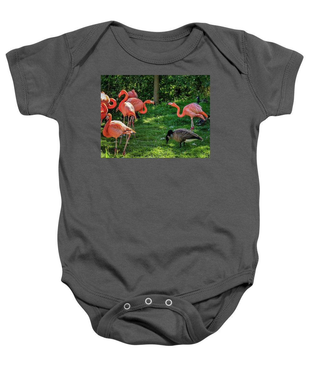 Steve Harrington Baby Onesie featuring the photograph Pink Flamingos And Imposters by Steve Harrington