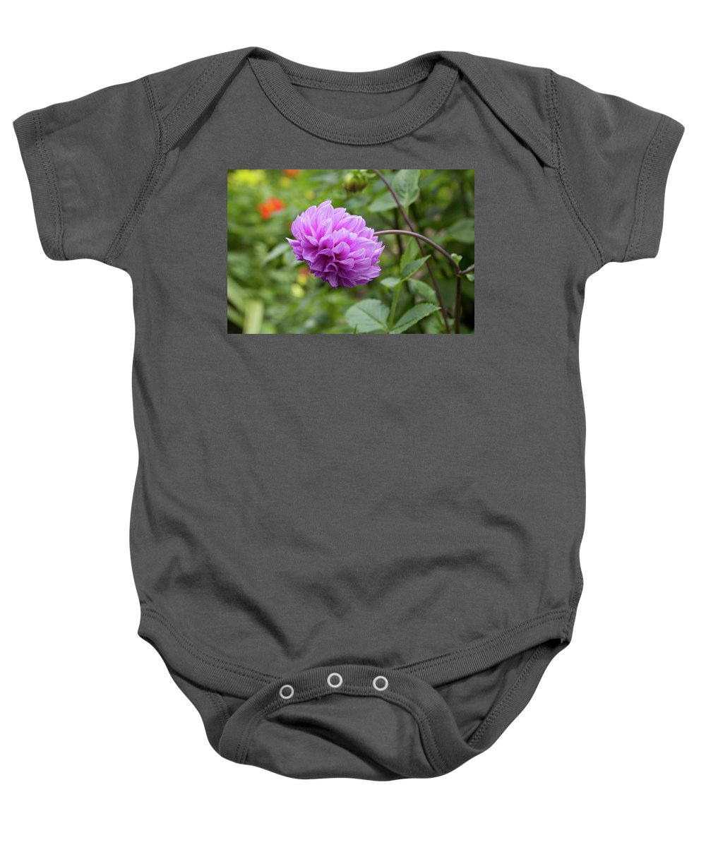 Pink Baby Onesie featuring the photograph Pink Lavender Dahlia by Diane Macdonald