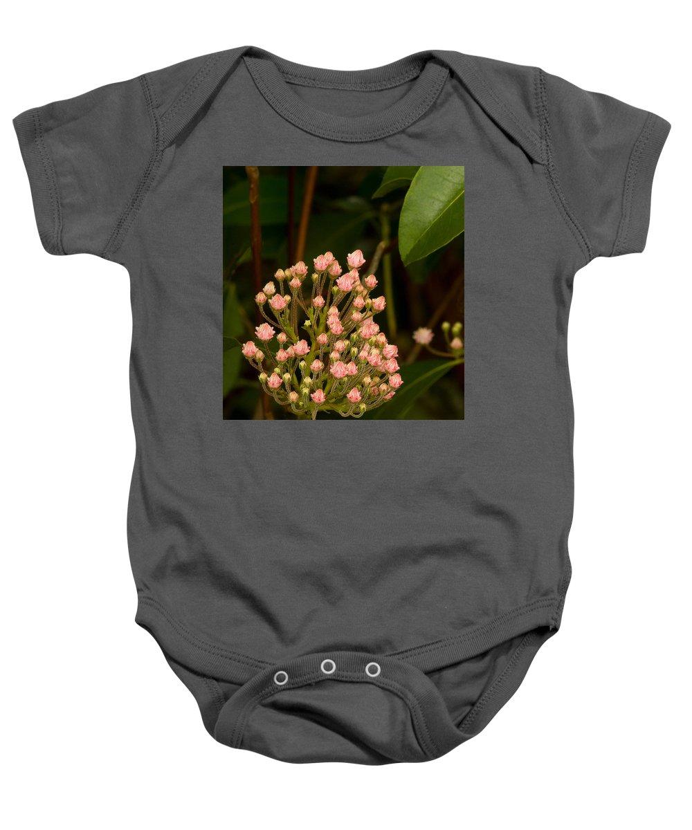 Pink Mountain Laurel Buds Baby Onesie featuring the photograph Pink Mountain Laurel Buds by Amanda Austwick