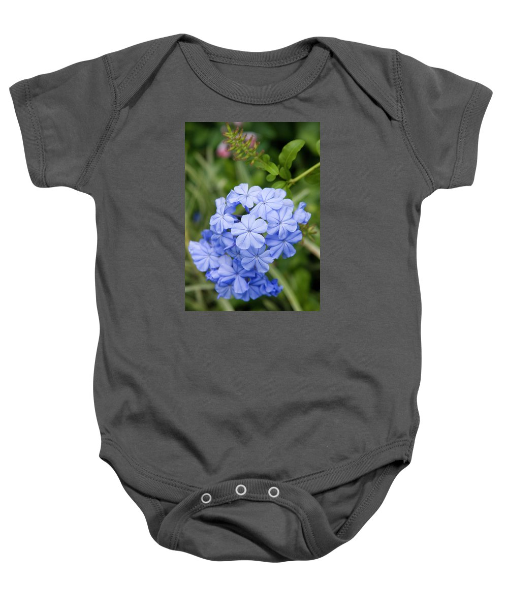 Blue Plumbago Flower Baby Onesie featuring the photograph Plumbago by Diane Macdonald