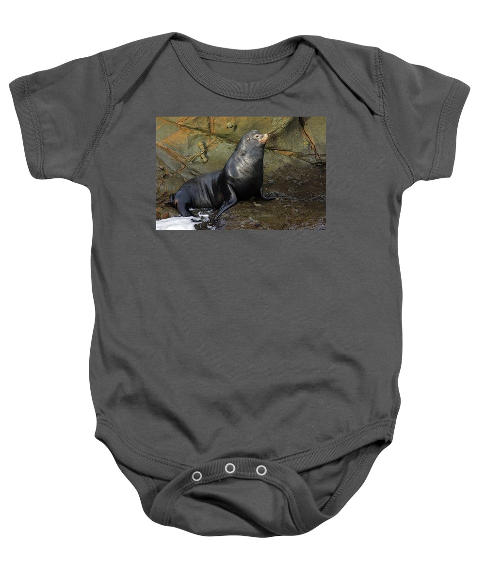 Sea Lion Baby Onesie featuring the photograph Posing Sea Lion by Randall Ingalls