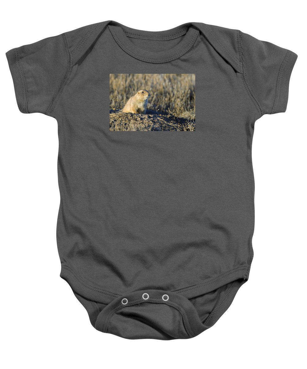 Prairie Baby Onesie featuring the photograph Prairie Dog Watchful Eye by Gary Langley