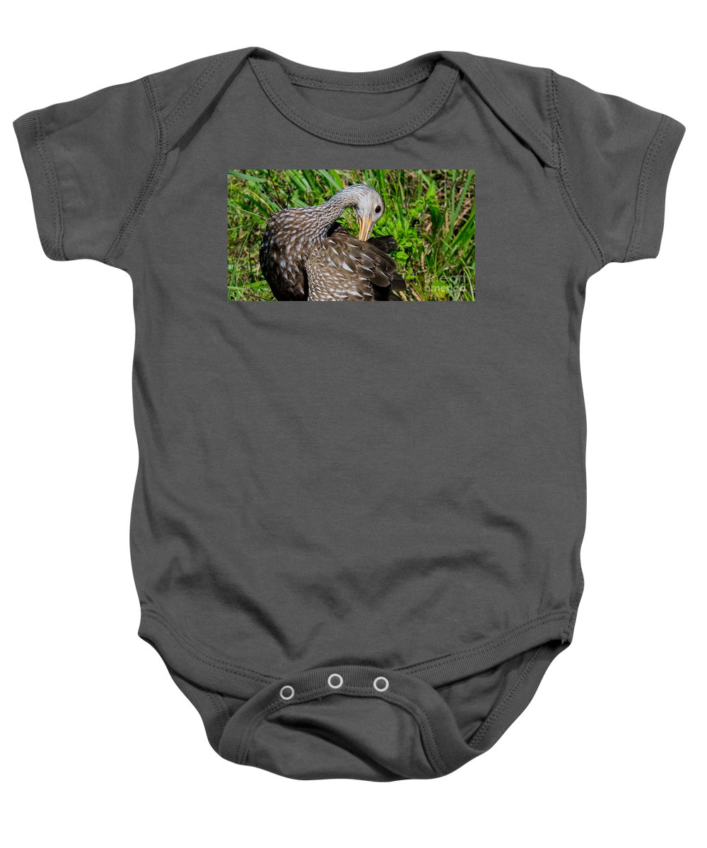 Limpkin Baby Onesie featuring the photograph Preening by John Greco