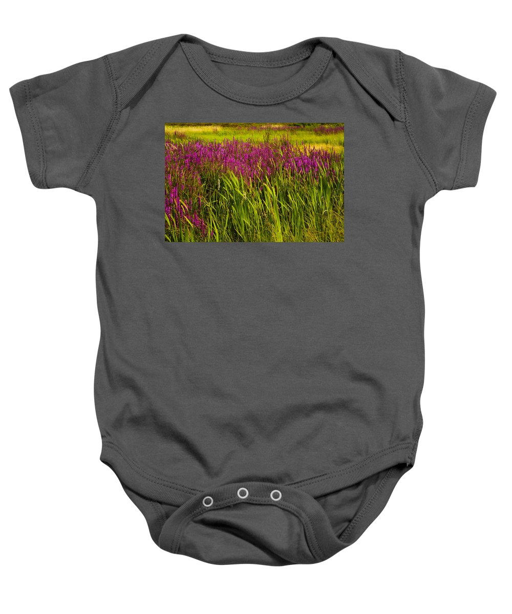 Wildflowers Baby Onesie featuring the photograph Purple Loosetrife And Cat-tails by Irwin Barrett