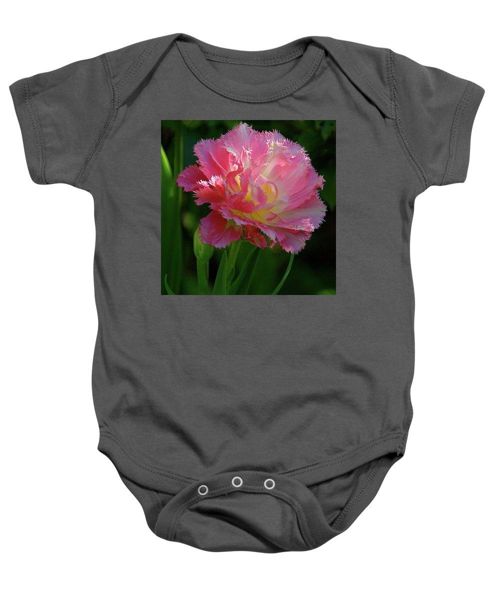 Tulip Baby Onesie featuring the photograph Queensland Tulip by Byron Varvarigos