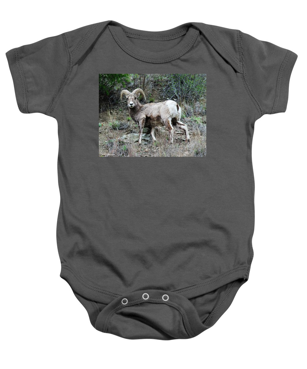Wildlife Nature West Baby Onesie featuring the photograph Ram Tough by Brandon and Becky Holley