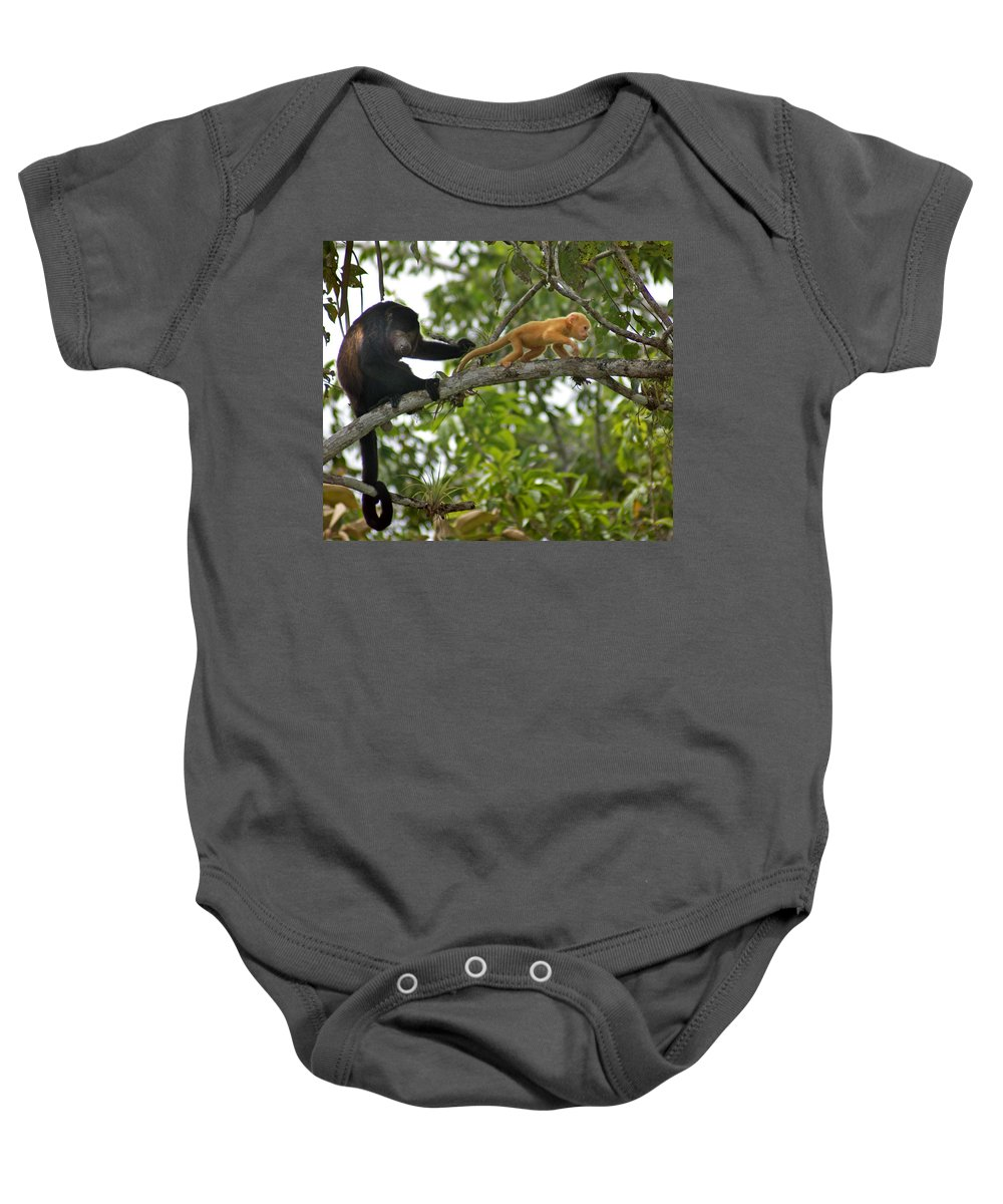 Monkey Baby Onesie featuring the photograph Rare Golden Monkey by Heather Coen