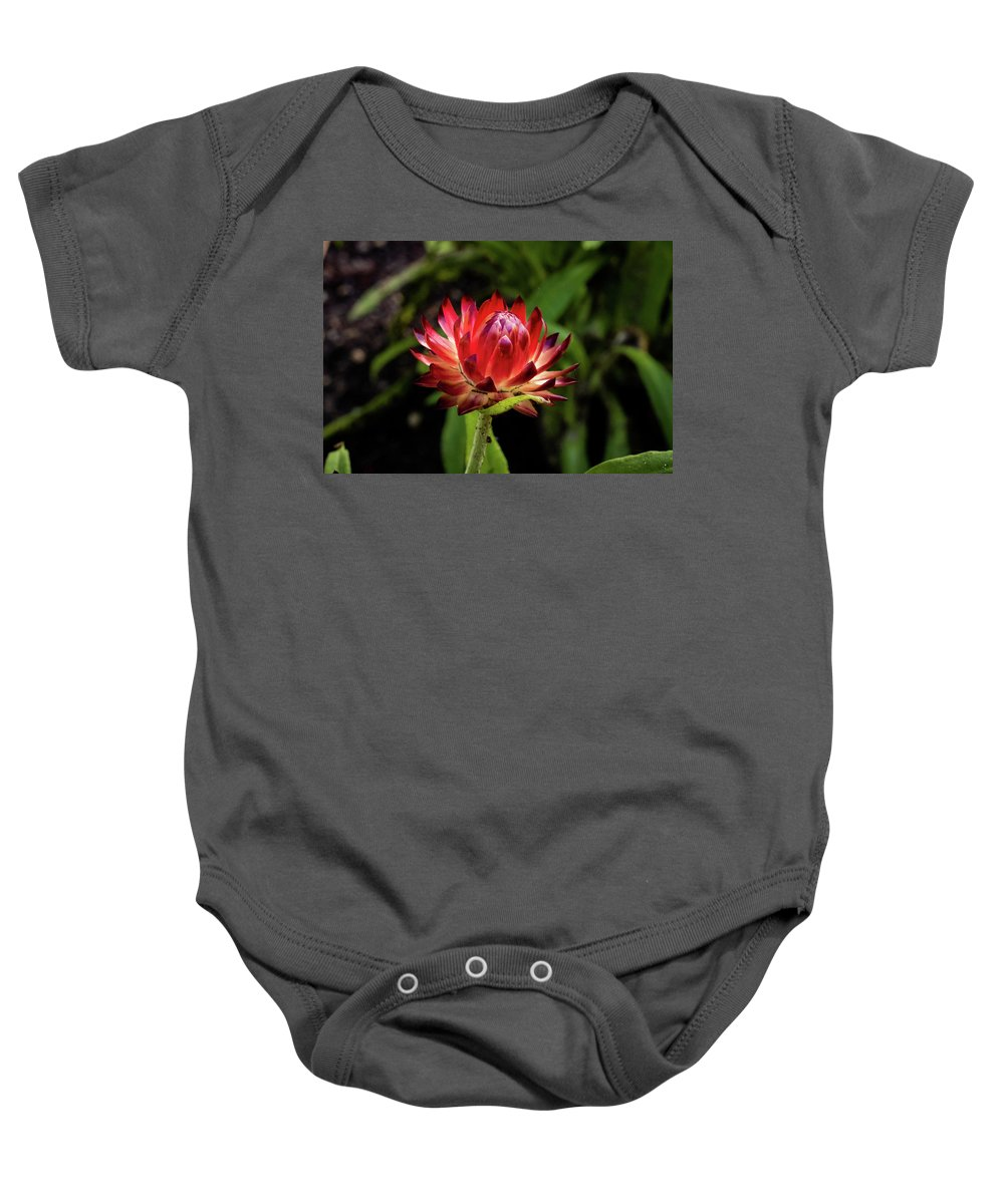 Jay Stockhaus Baby Onesie featuring the photograph Ready by Jay Stockhaus