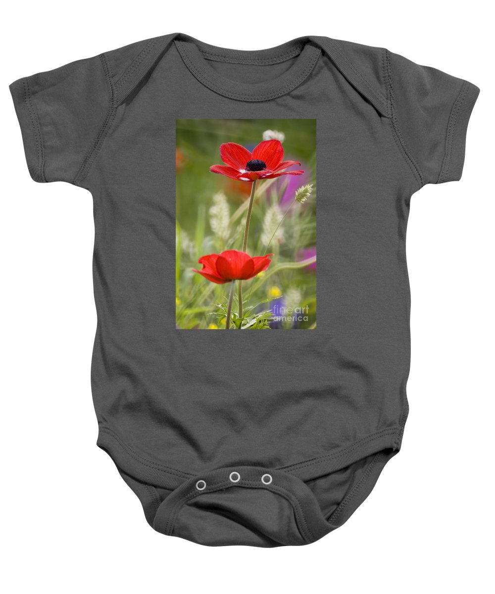 Red Baby Onesie featuring the photograph Red Anemone Coronaria In Nature by Ofer Zilberstein