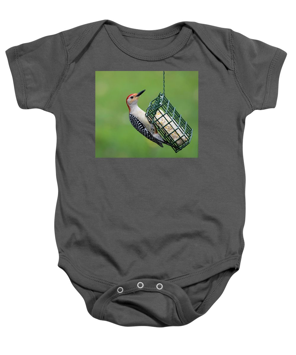 Birds Baby Onesie featuring the photograph Red Bellied Woodpecker by Clifford Pugliese
