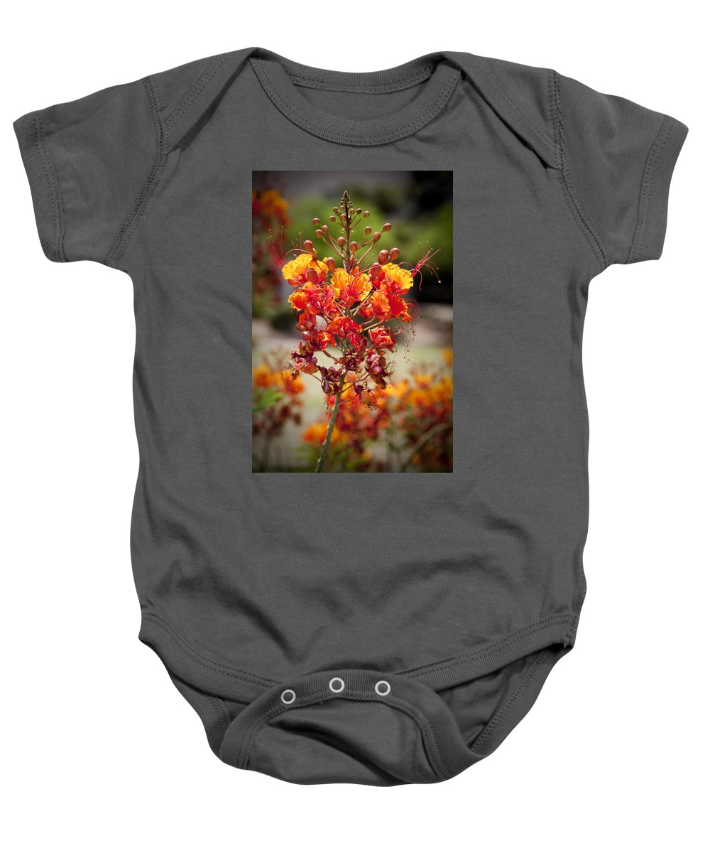 Red Bird Of Paradise Baby Onesie featuring the photograph Red Bird by Kelley King