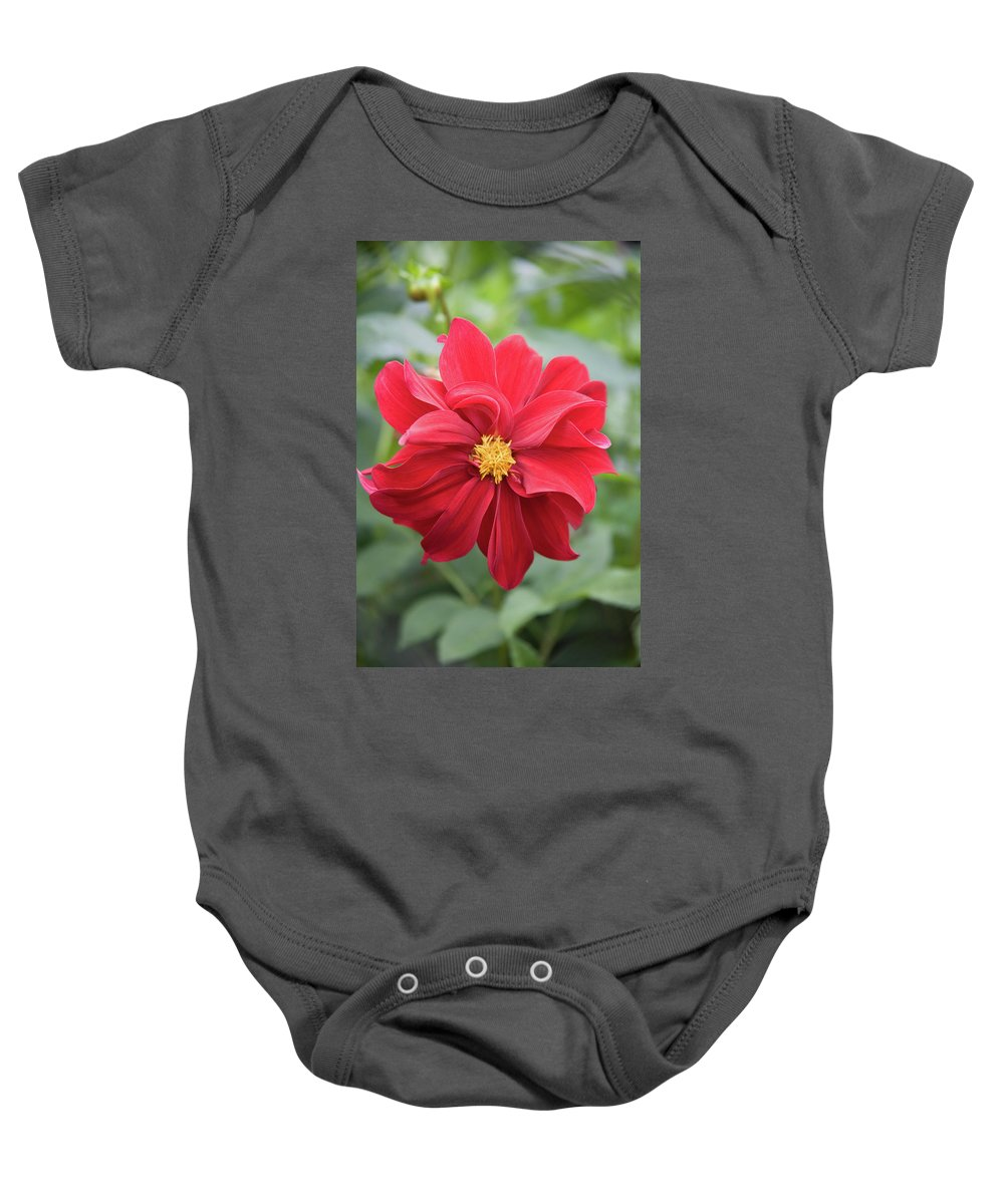 Open Centered Baby Onesie featuring the photograph Red Dahlia-2 by Diane Macdonald
