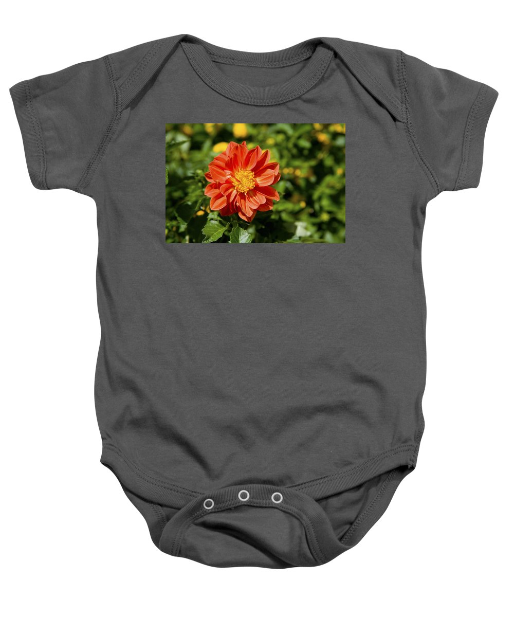 Open Centered Baby Onesie featuring the photograph Red Dahlia by Diane Macdonald