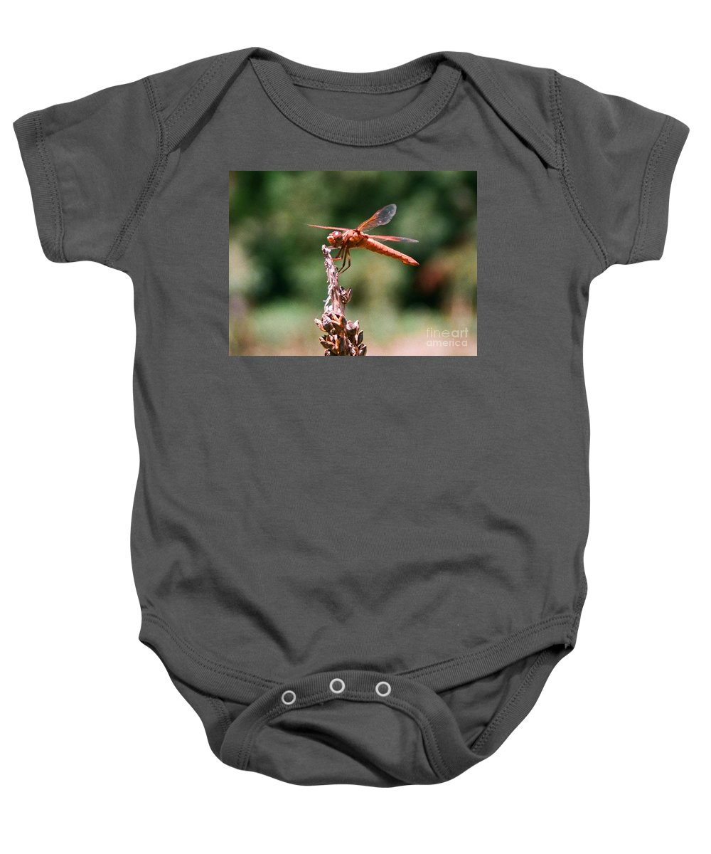 Dragonfly Baby Onesie featuring the photograph Red Dragonfly II by Dean Triolo