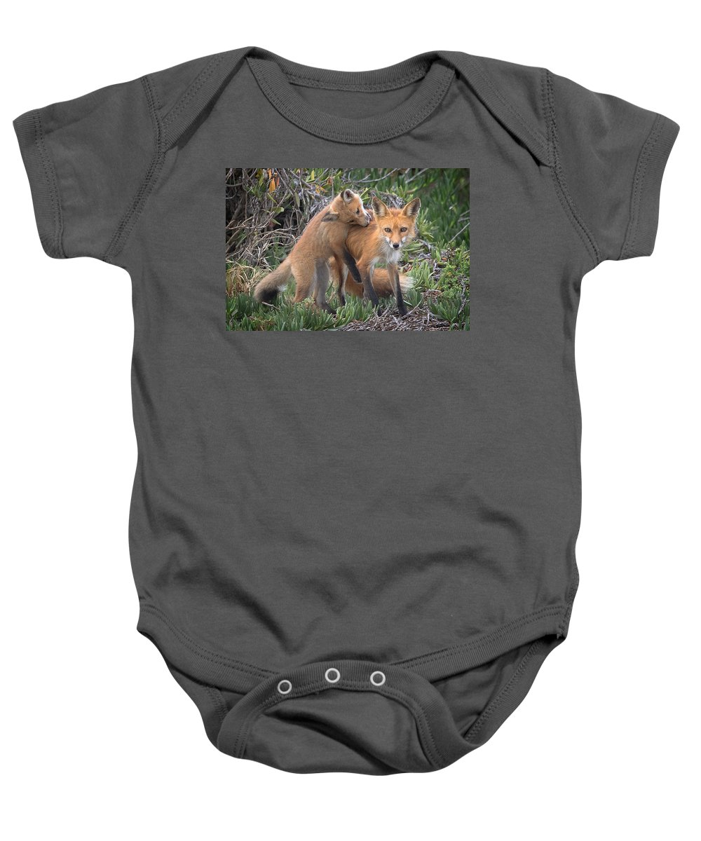 Animal Baby Onesie featuring the photograph Red Fox Mama's Love Bite by Leslie Reagan - Joy To The Wild Photos
