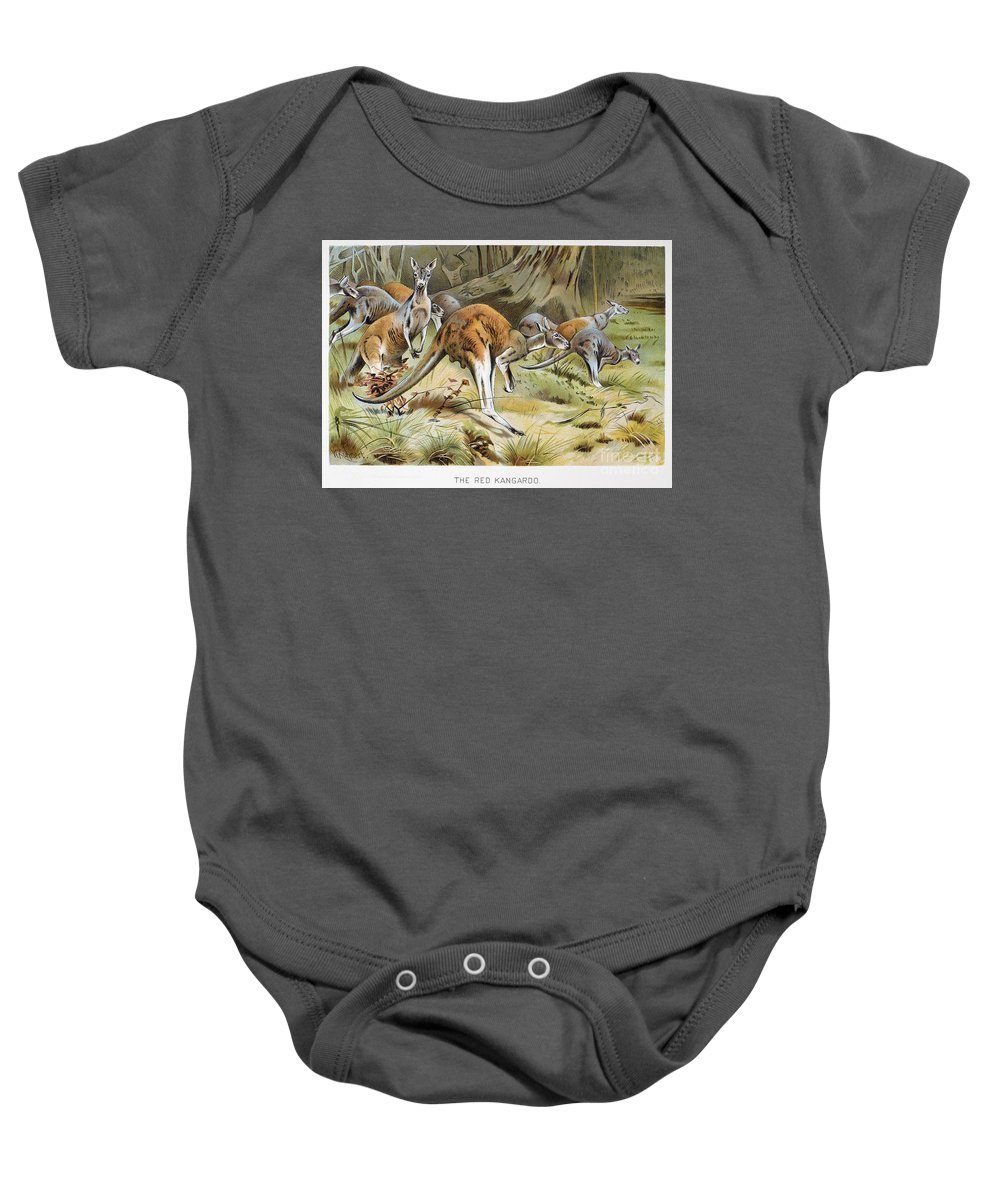 Artcom Baby Onesie featuring the photograph Red Kangaroo by Granger