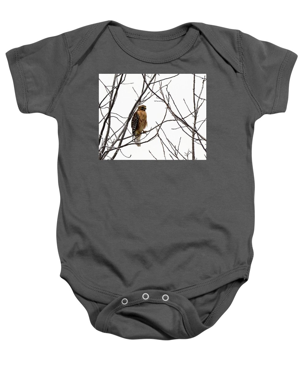 Bird Baby Onesie featuring the photograph Red-shouldered Hawk by Donald Nelson
