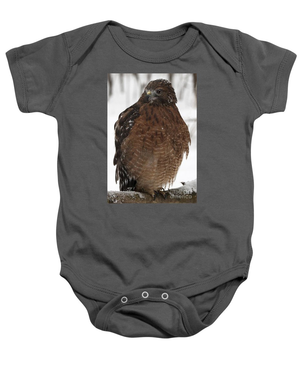 Red Shouldered Hawk Baby Onesie featuring the photograph Red Shouldered Hawk Portrait by Emma England