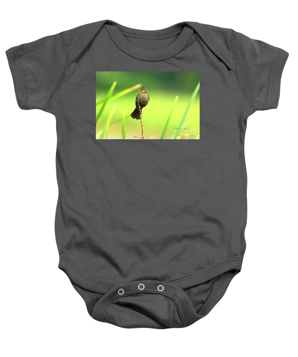 Red Winged Baby Onesie featuring the photograph Red Winged Blackbird Female by Deborah Benoit