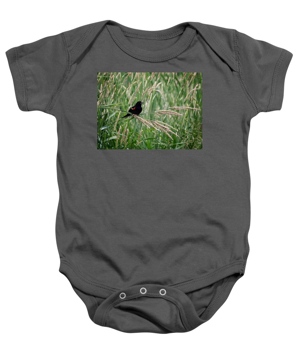Red-winged Blackbird Baby Onesie featuring the photograph Red-winged Blackbird by LeAnne Perry