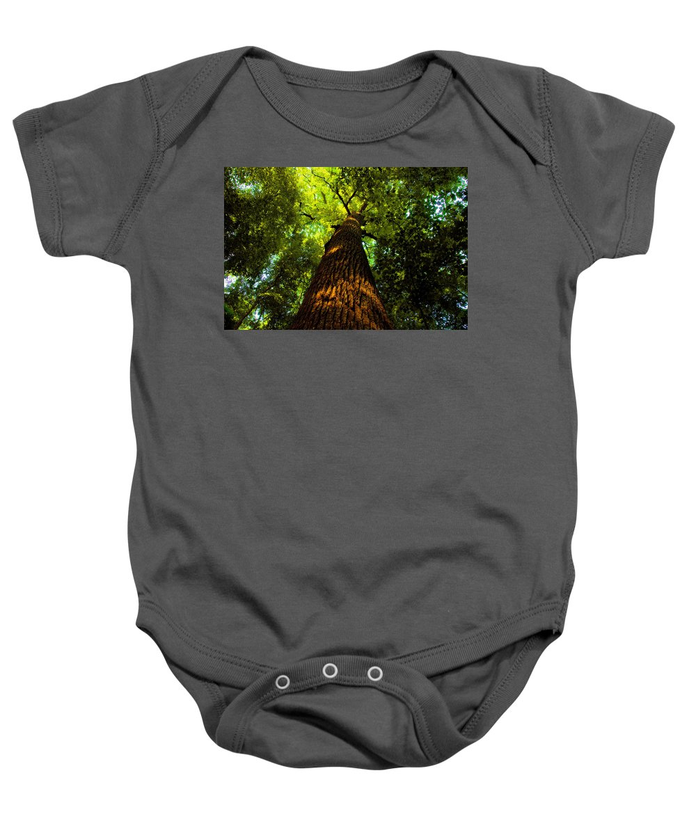 Redwood Forest Baby Onesie featuring the painting Redwoods by David Lee Thompson