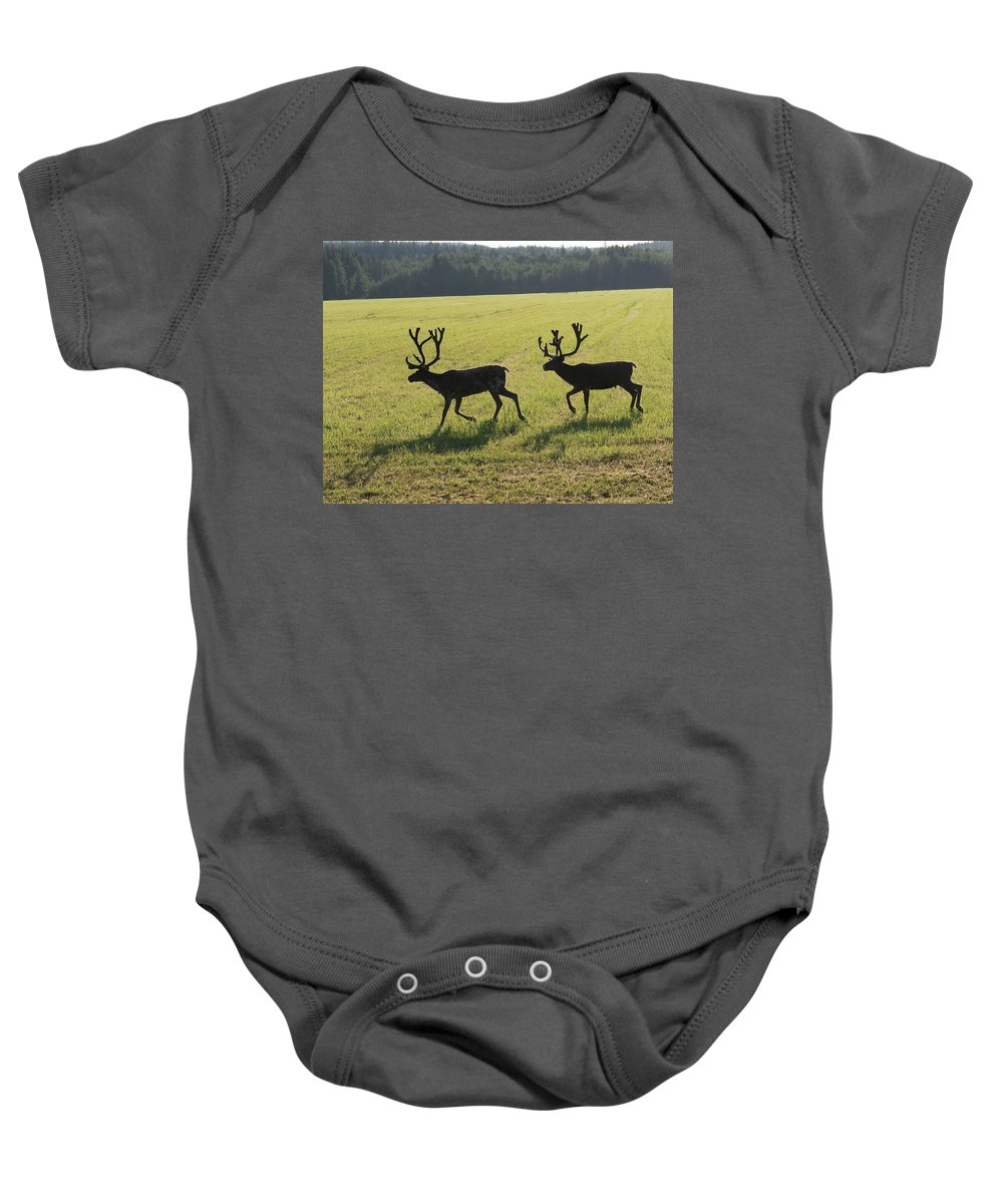 Reindeers On Swedish Fjeld In The Morning By Tamara Sushko Baby Onesie featuring the photograph Reindeers On Swedish Fjeld by Tamara Sushko