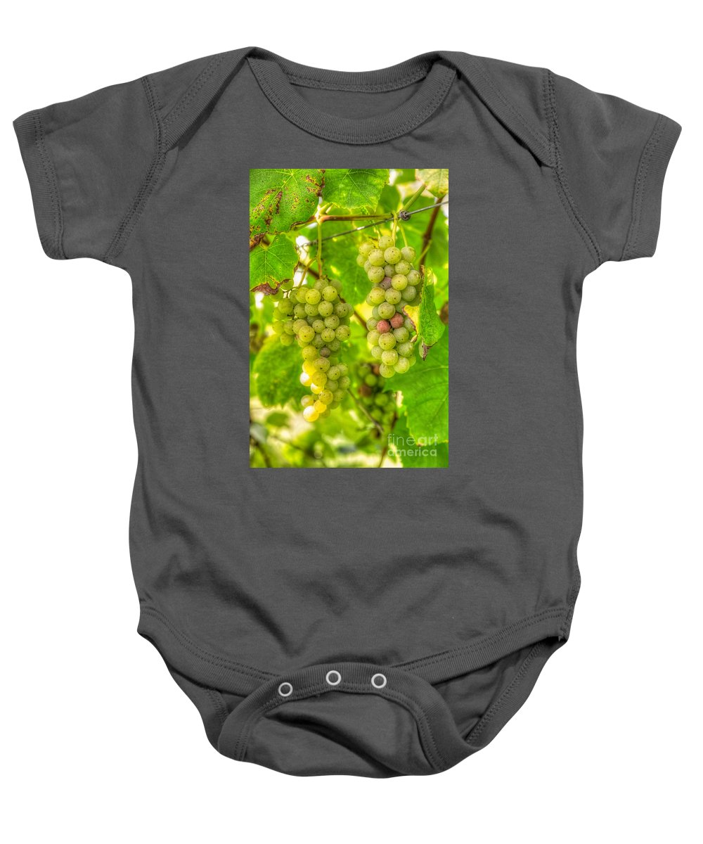 Baby Onesie featuring the photograph Riesling Harvest II by Michele Steffey