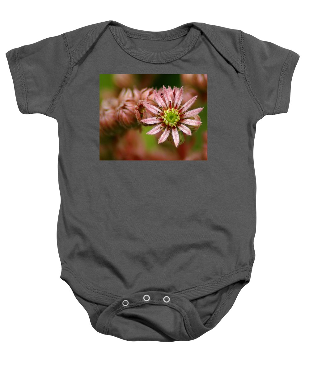 Flowers Baby Onesie featuring the photograph Rejoice The New Day by Ben Upham III