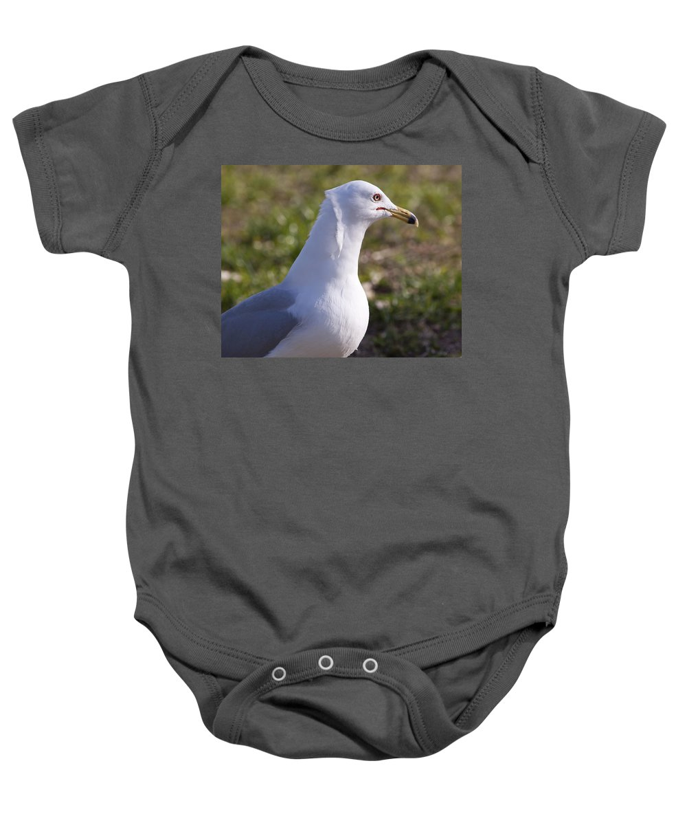 Larus Baby Onesie featuring the photograph Ring-billed Gull by Allan Hughes
